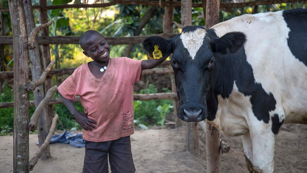 Photo of Eddie and Bena the cow
